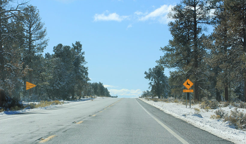 on-the-road-to-grand-canyon-2